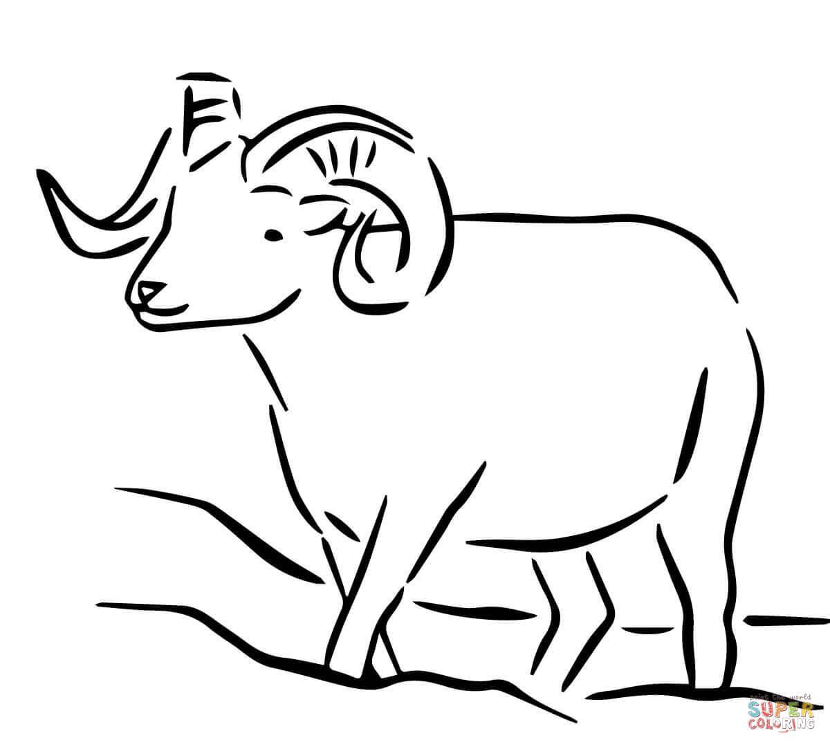 Alaska Dall Sheep Coloring Page