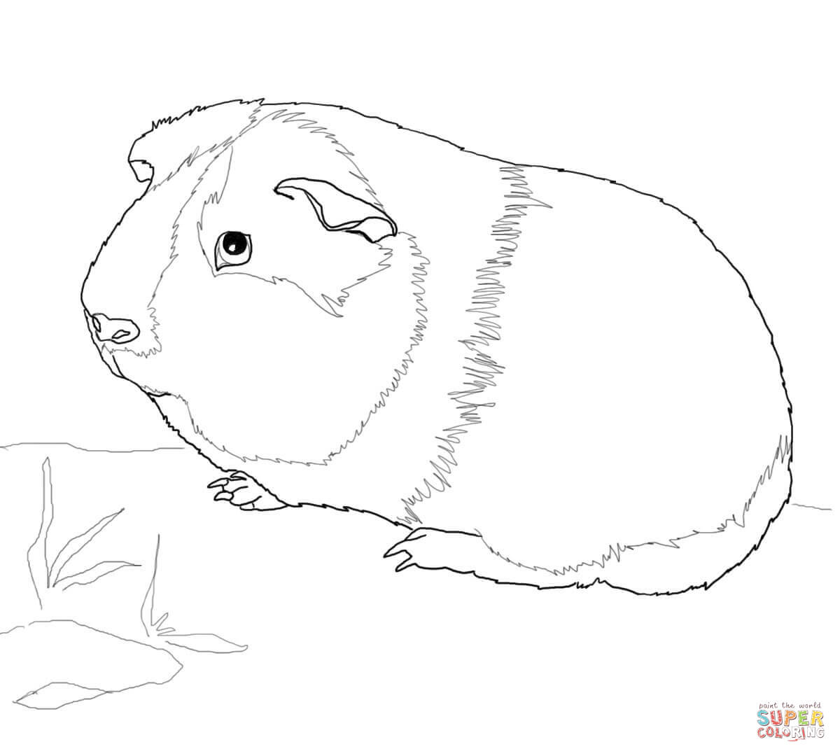 Cute Guinea Pig Coloring Page