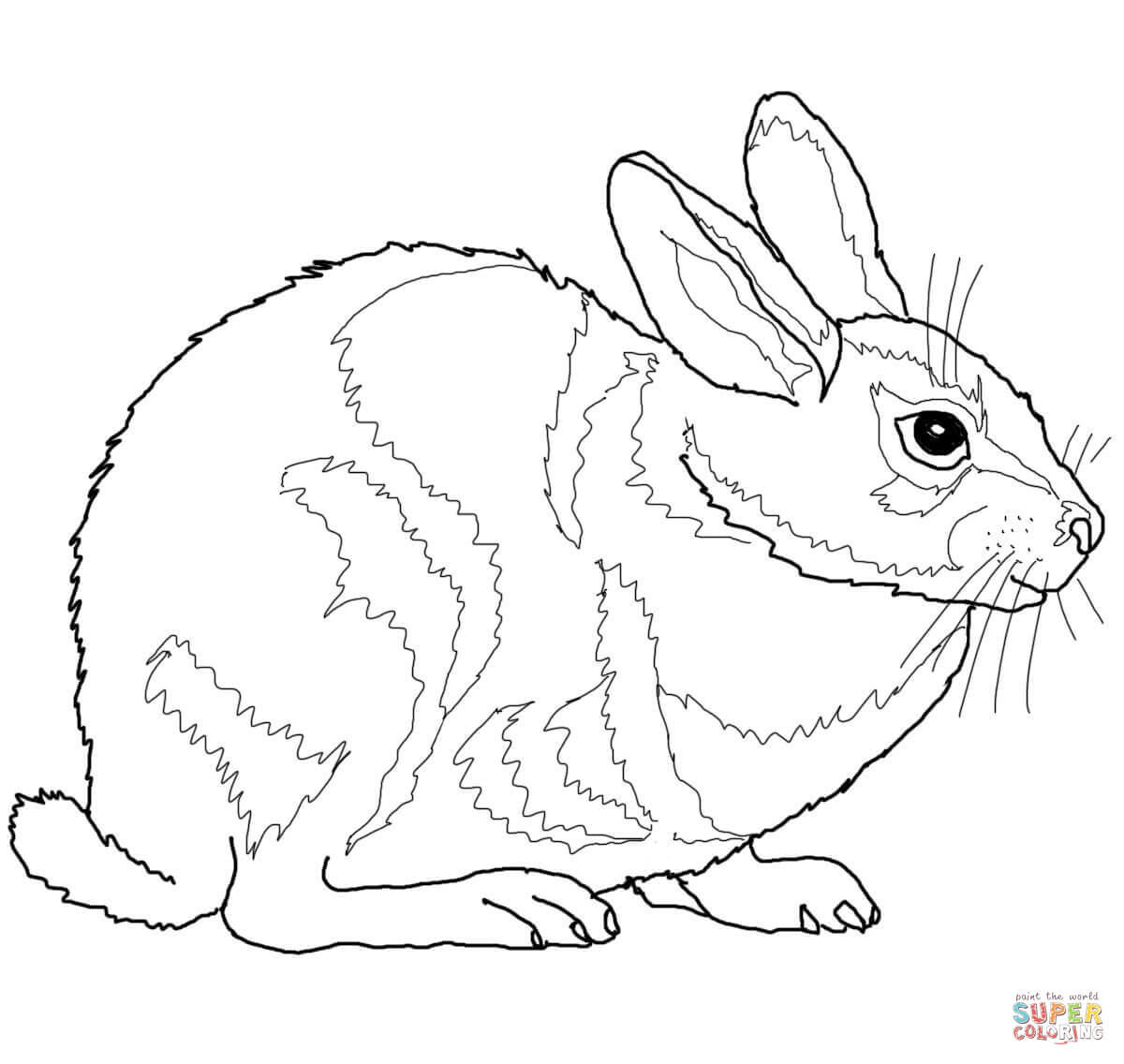 Eastern Cottontail Rabbit Coloring Page