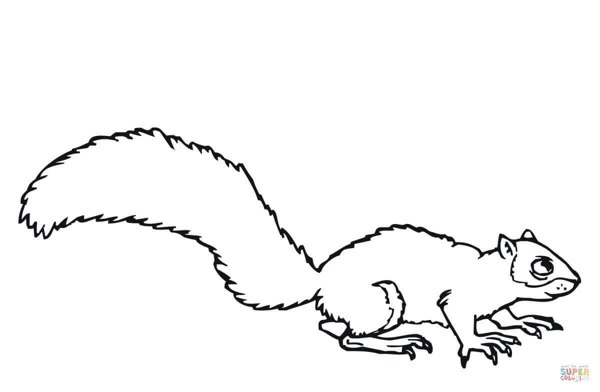 Gray Squirrel Coloring Page