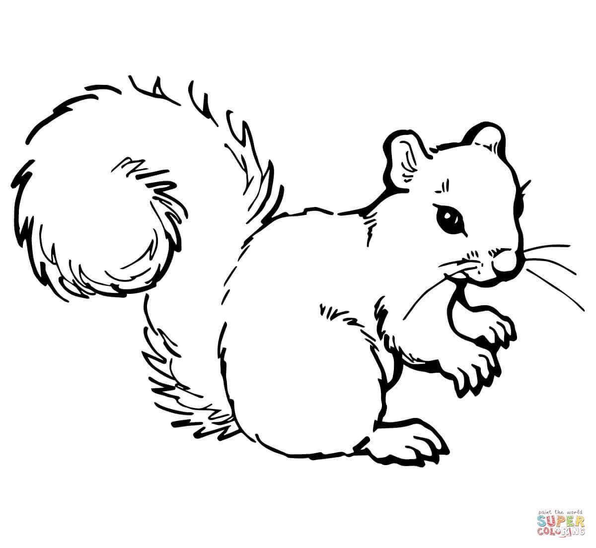 Grey Squirrel Coloring Page
