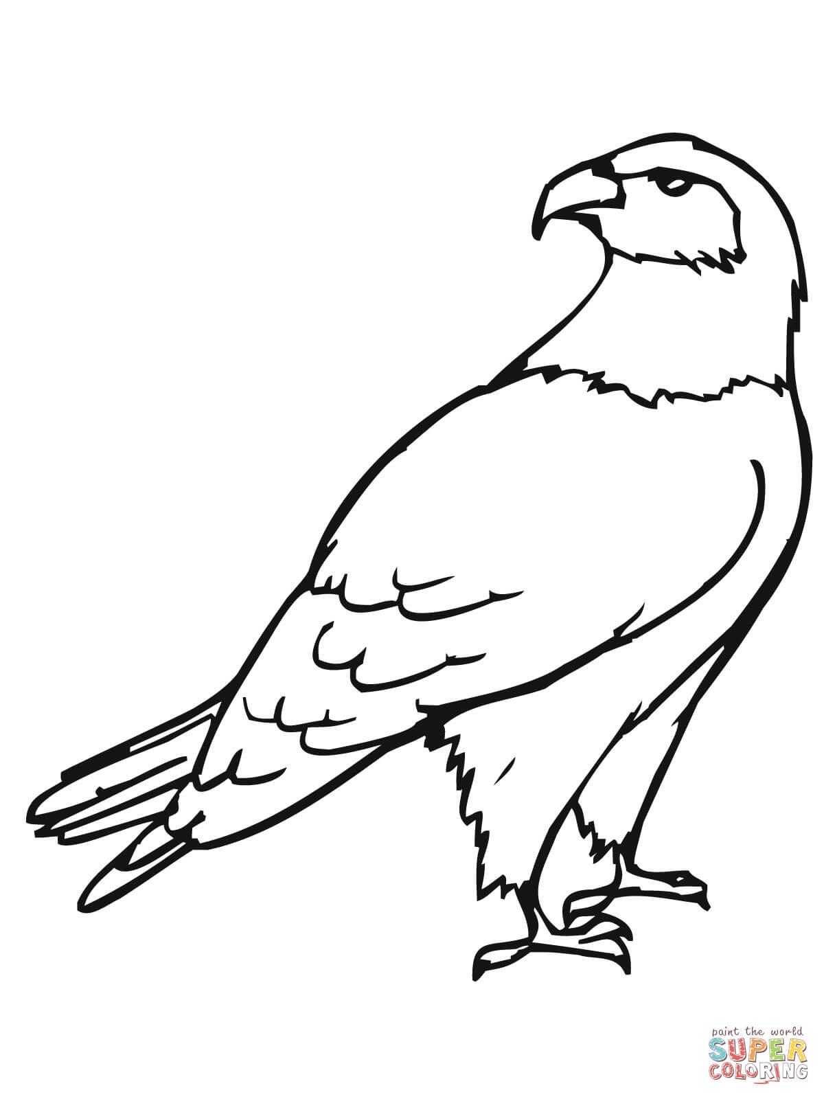 Hawk Bird Coloring Page