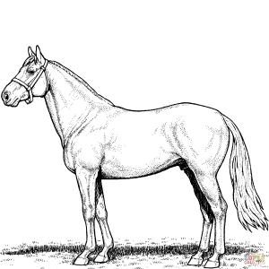 Chestnut Quarter Horse Foal | Wiring Diagram Database