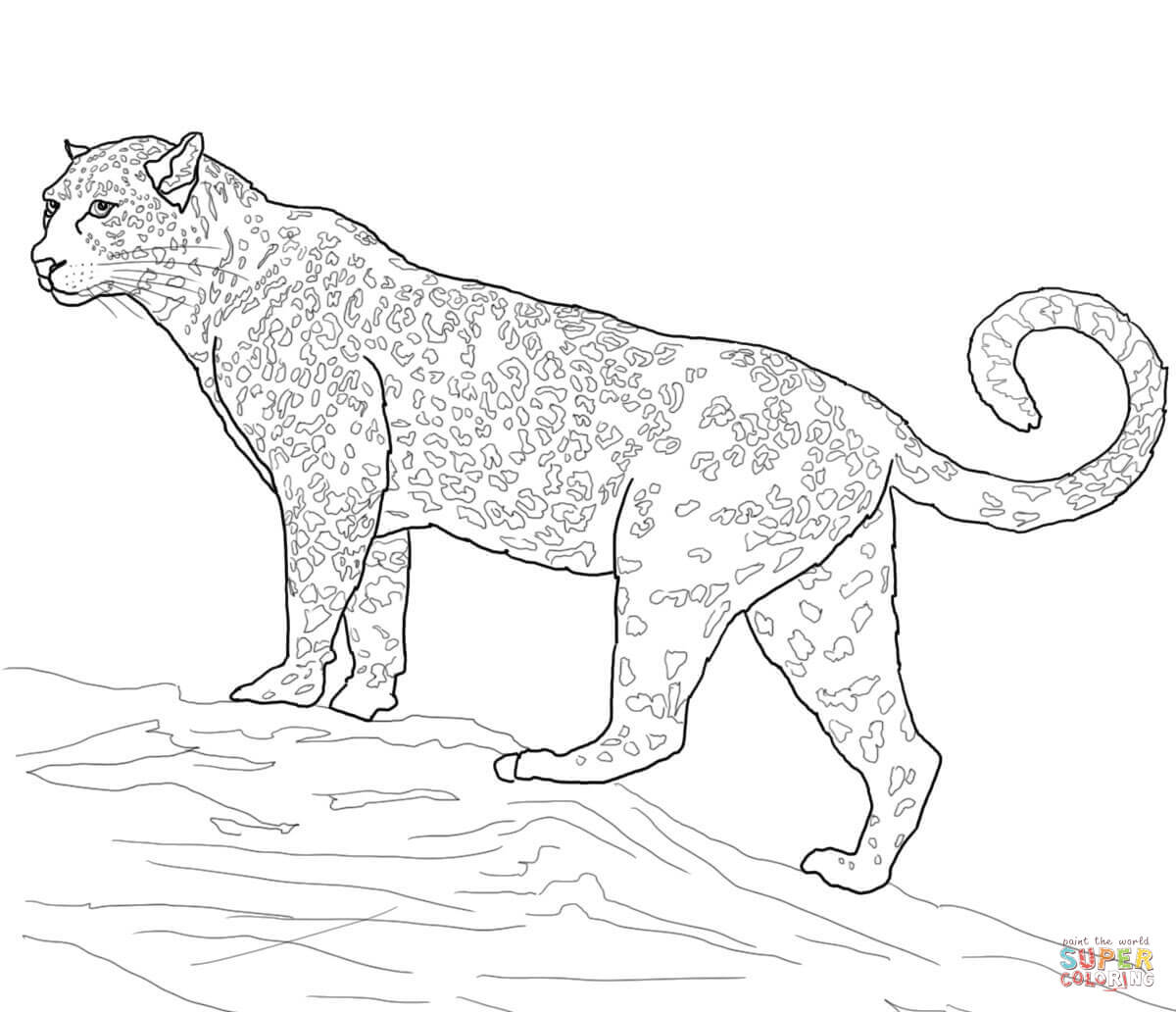 Jaguar Big Cat Coloring Page