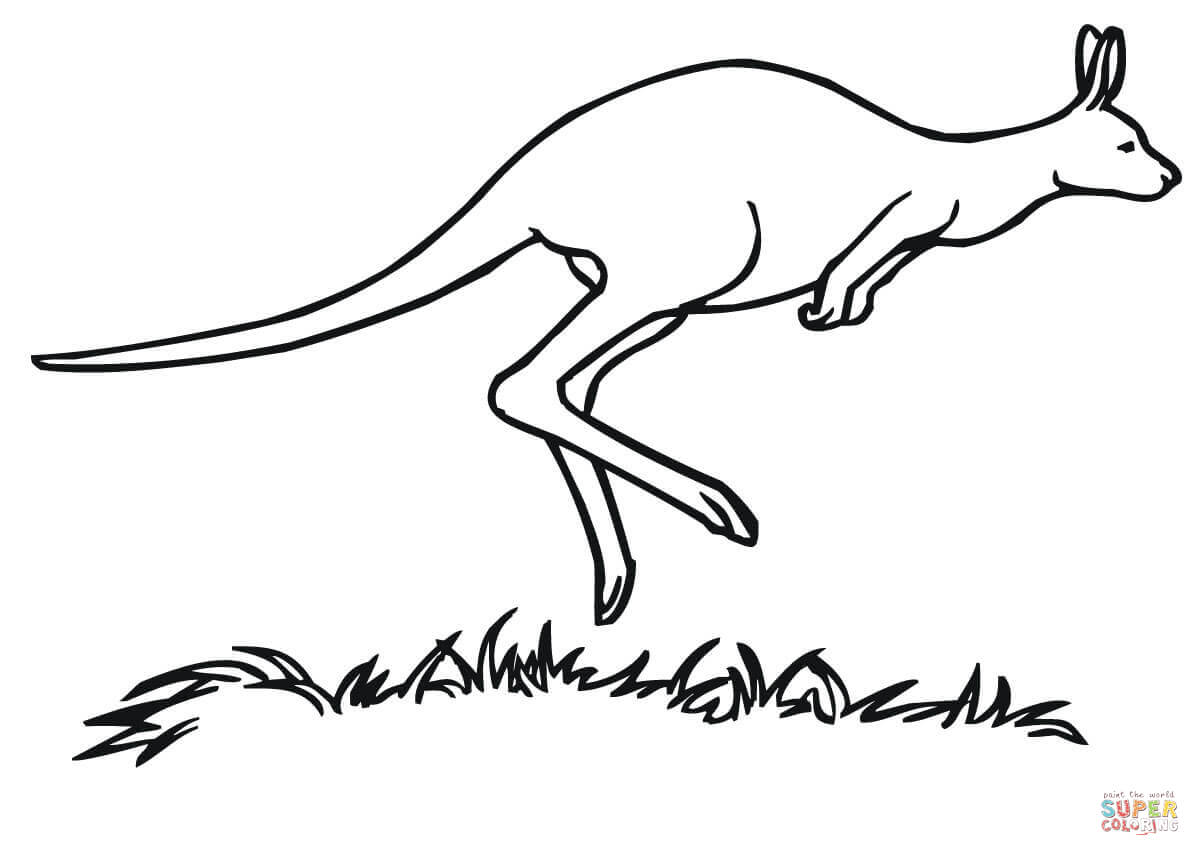 Kangaroo Marsupial Coloring Page