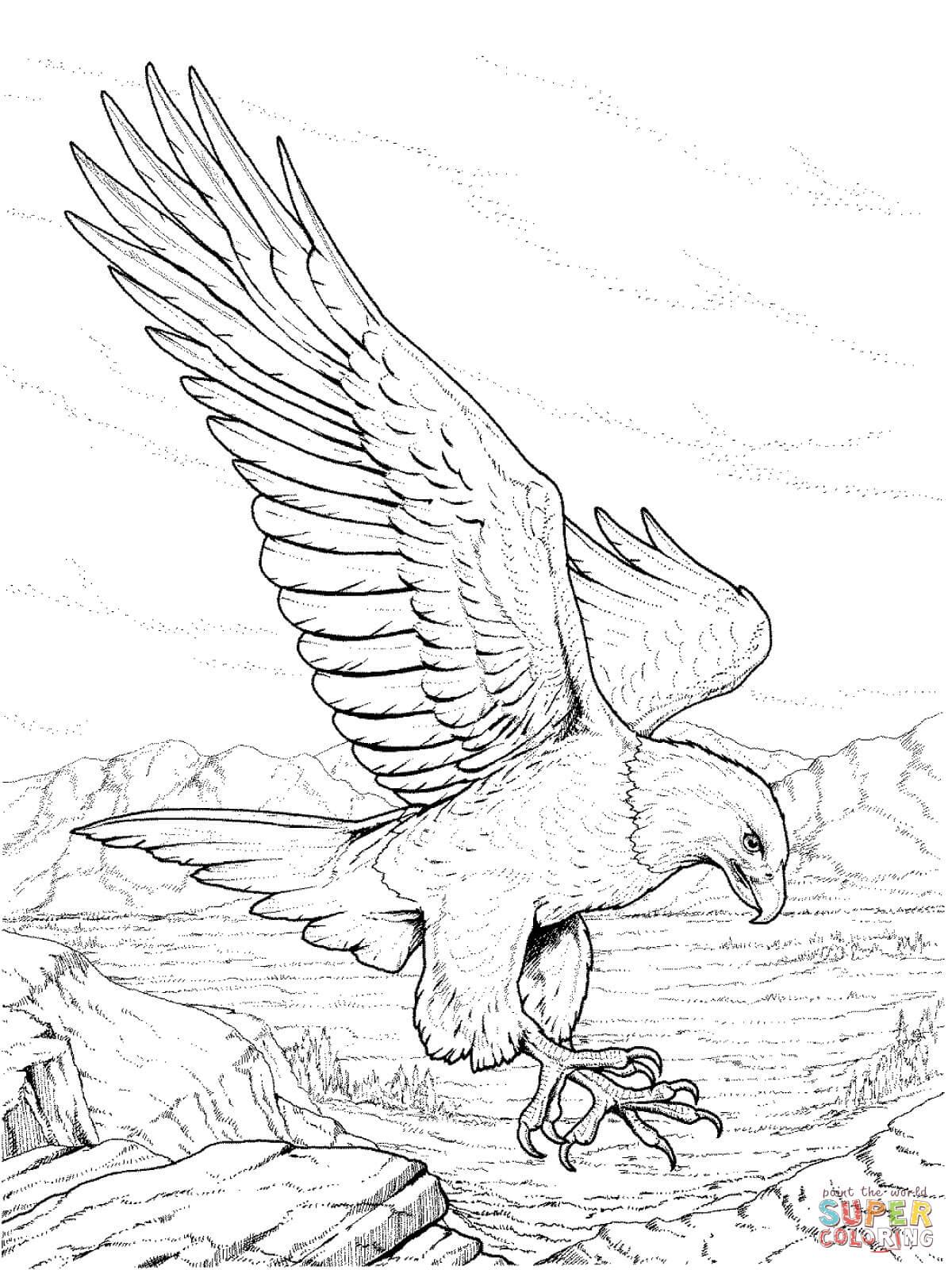 Disegno Di Aquila Calva Del Nordamerica Da Colorare