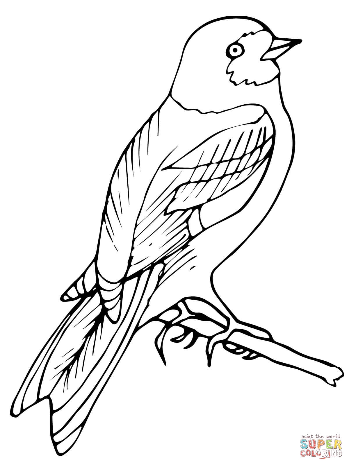 Perched Wren Bird Coloring Page