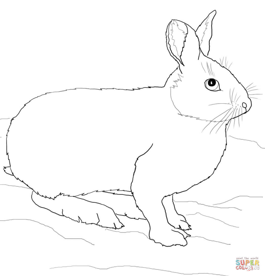 Snowshoe Hare Or Rabbit Coloring Page