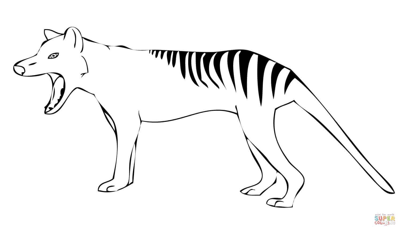 Tasmanian Tiger Yawn Coloring Page