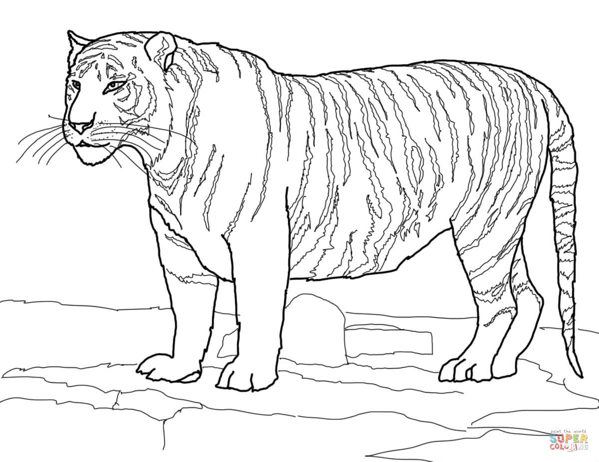 Coloring Pages Tiger Coloring Page