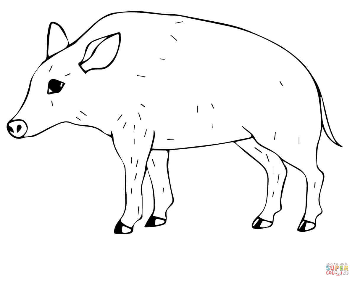 Wild Pig Coloring Page