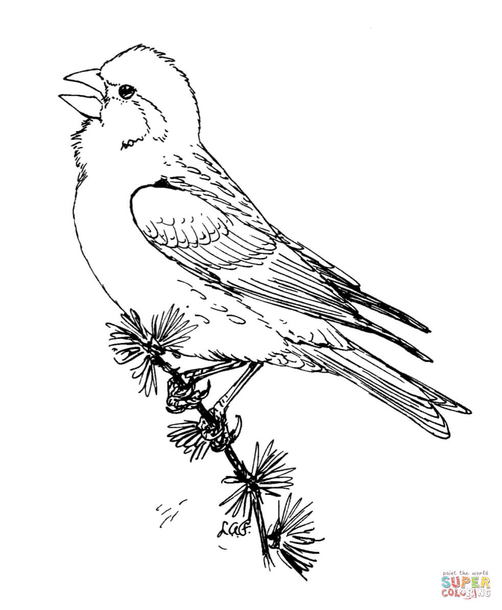 Purple Finch Coloring Page Free Printable Coloring Pages