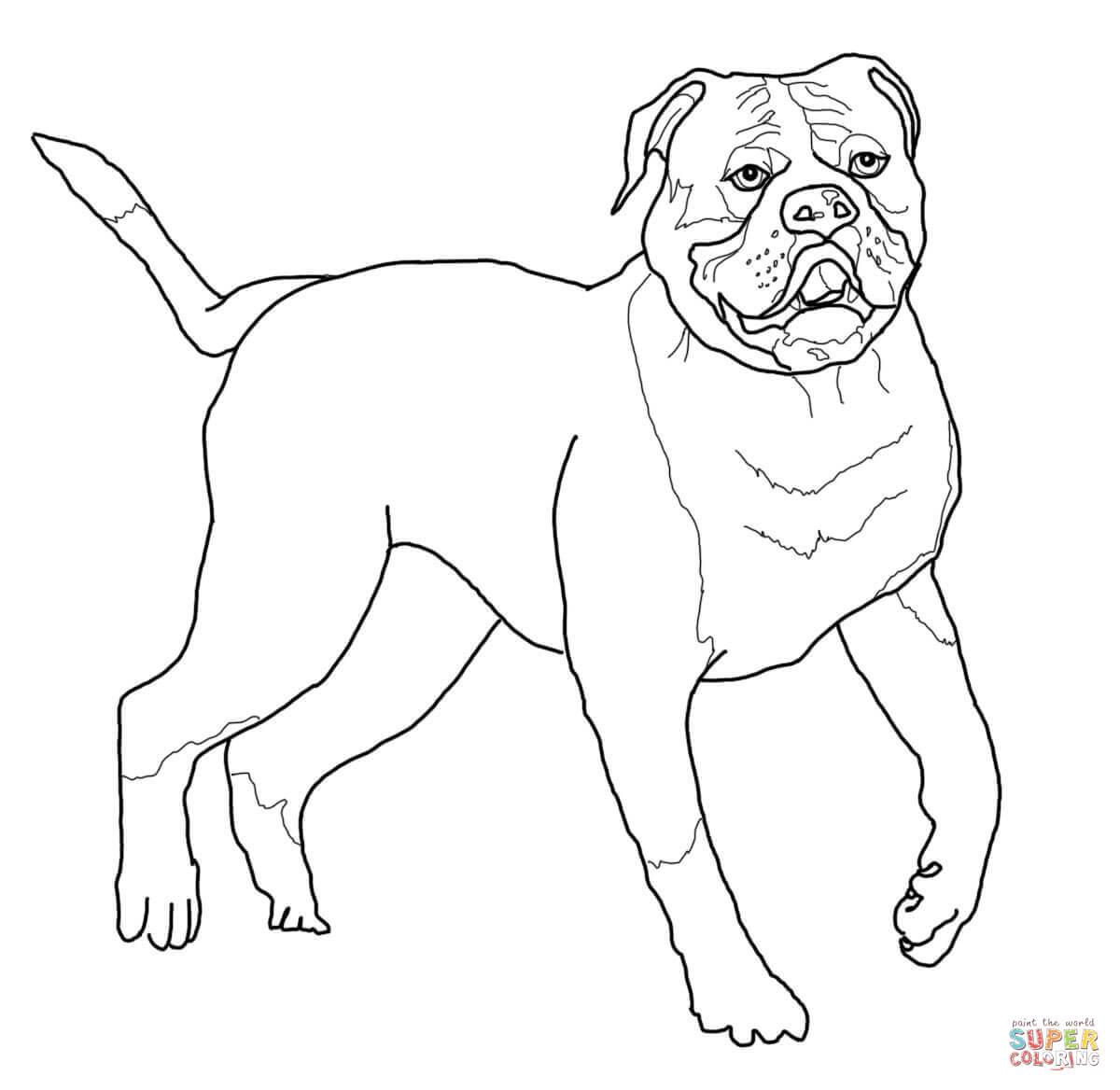 American Bulldog Coloring Page