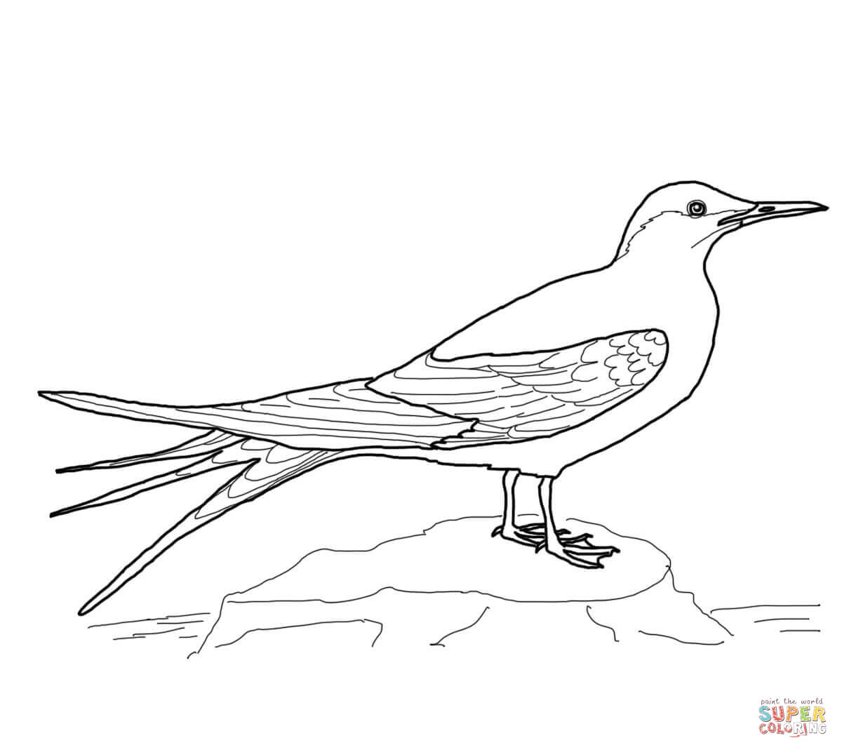 Arctic Tern Coloring Page