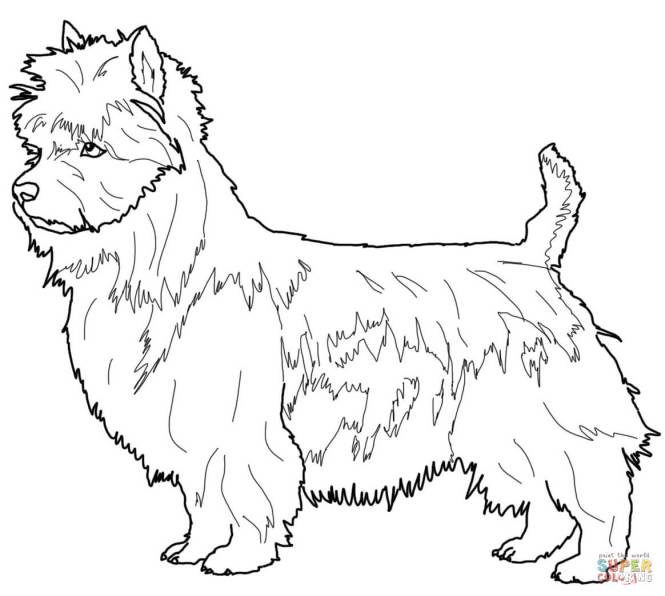 Click The Australian Terrier Coloring Pages
