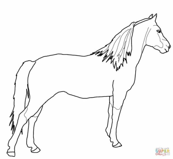 Morgan Horse coloring page Free Printable Coloring Pages