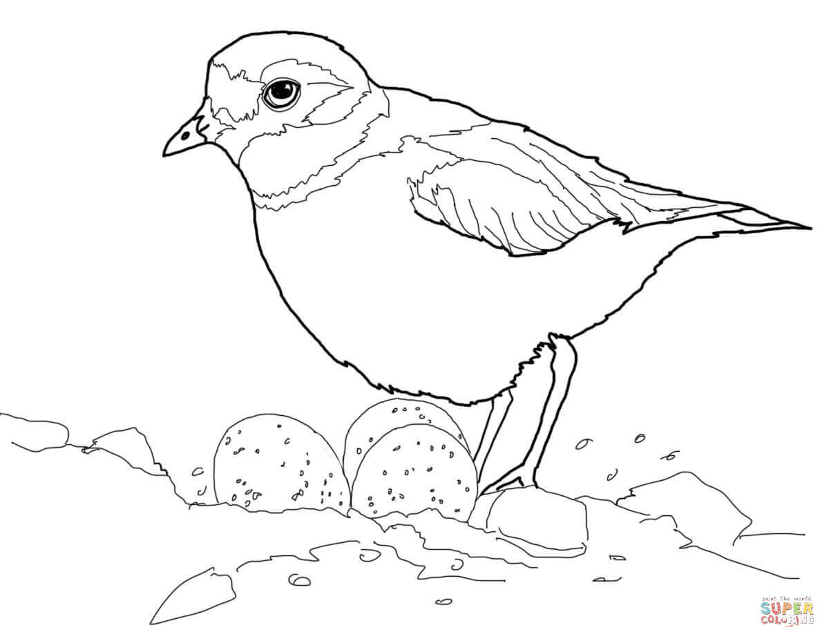 Piping Plover With Eggs In Nest Coloring Page