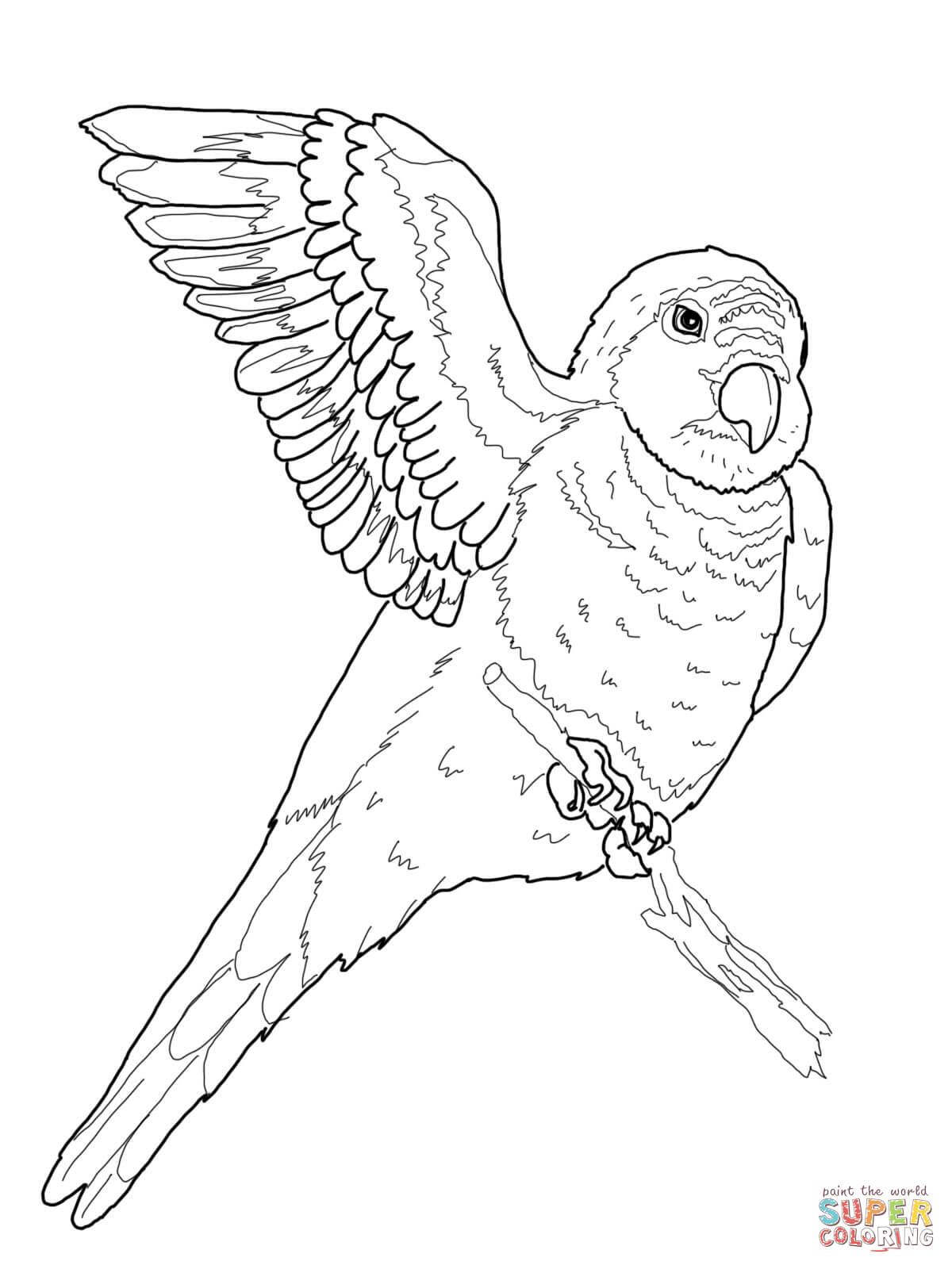 Quaker Parrot Coloring Page