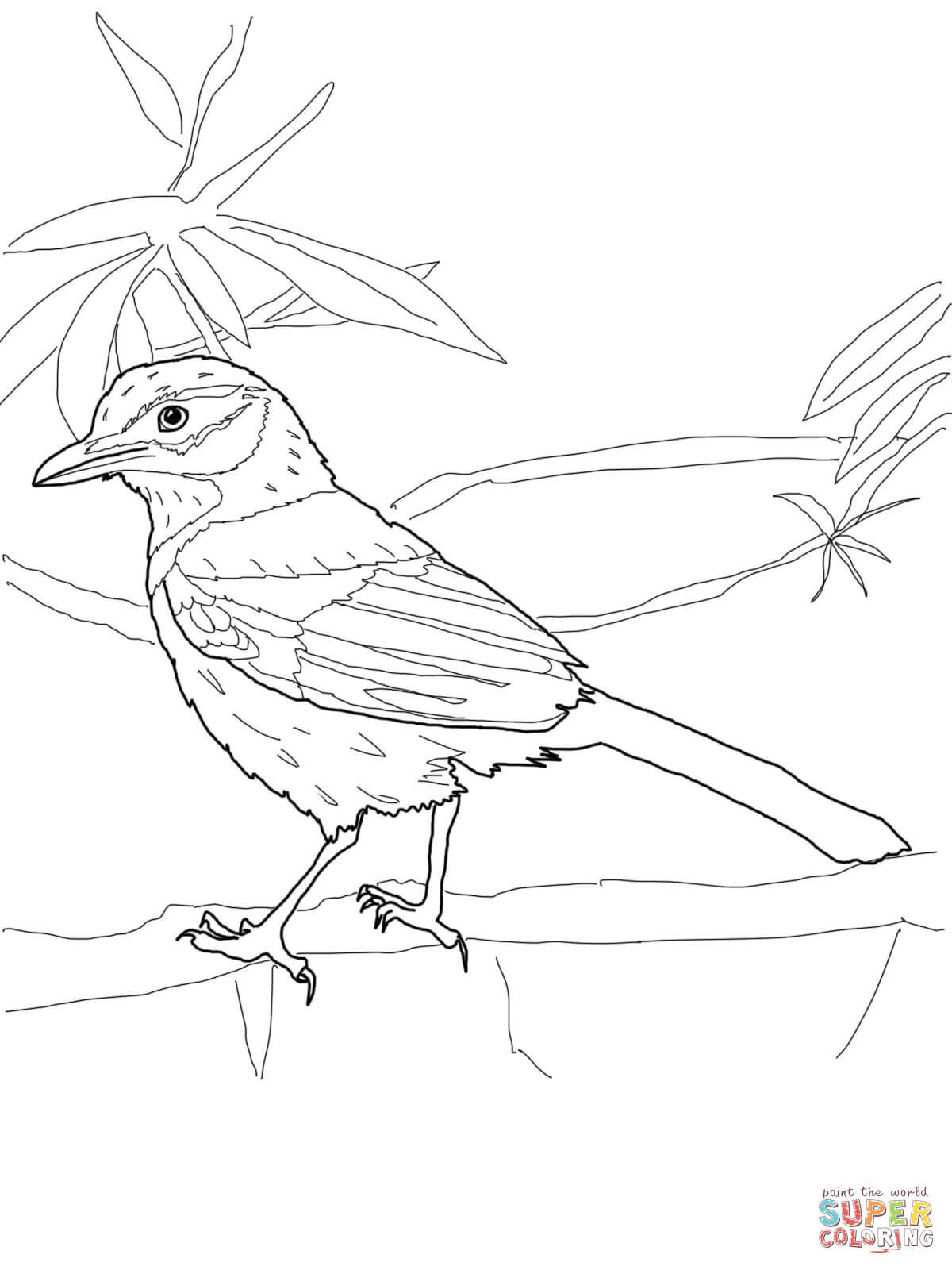 Scrub Jay Coloring Page Free Printable Coloring Pages