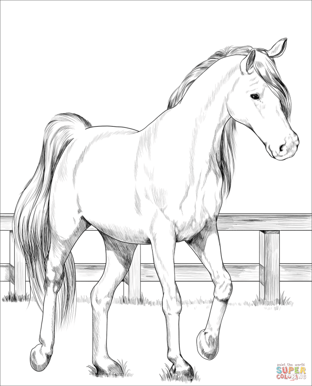 Trakehner horse coloring page  Free Printable Coloring Pages