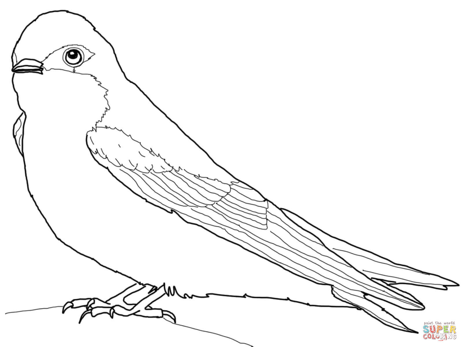 Tree Swallow Coloring Page