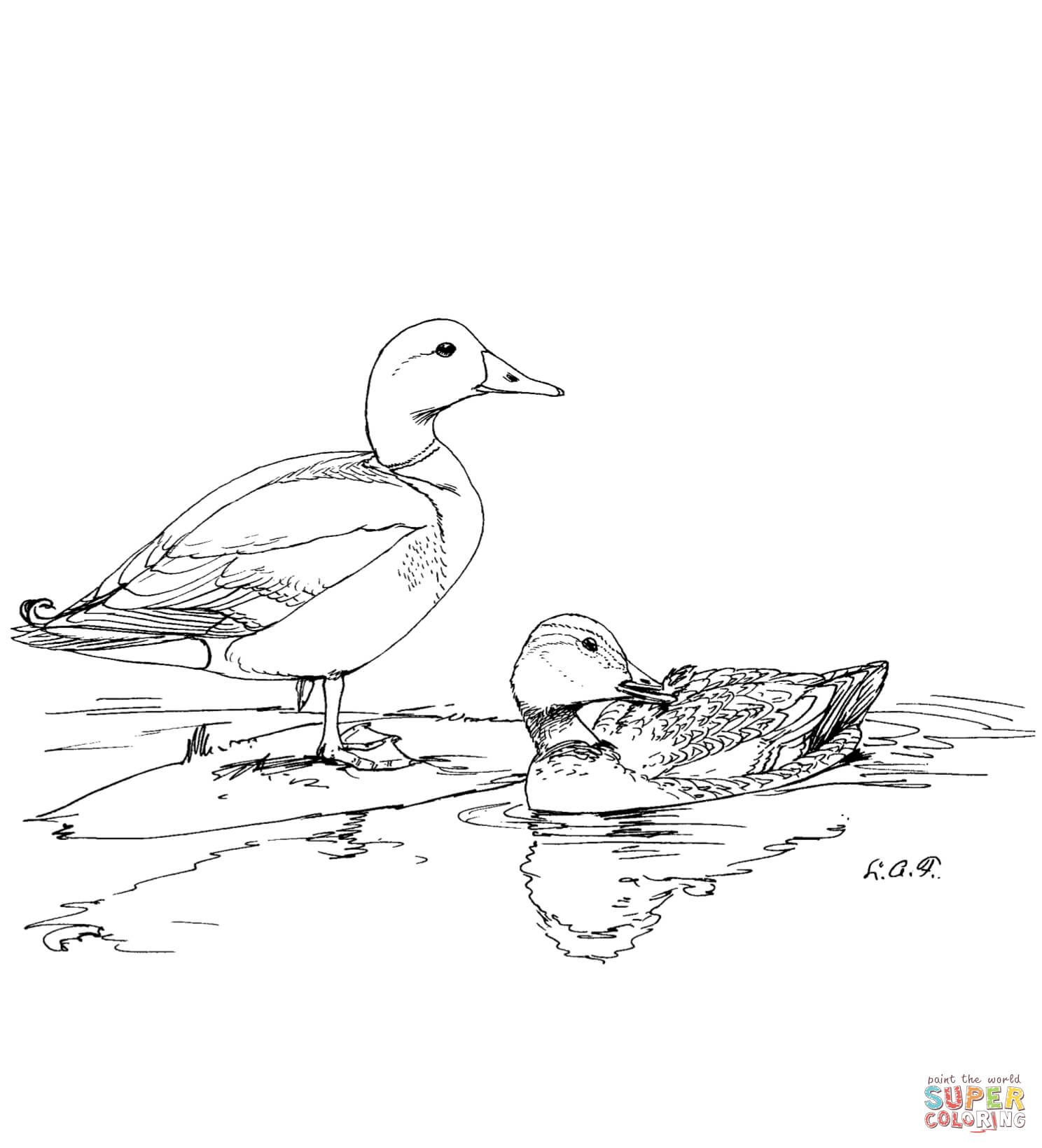 Duck Coloring Pages For Preschoolers