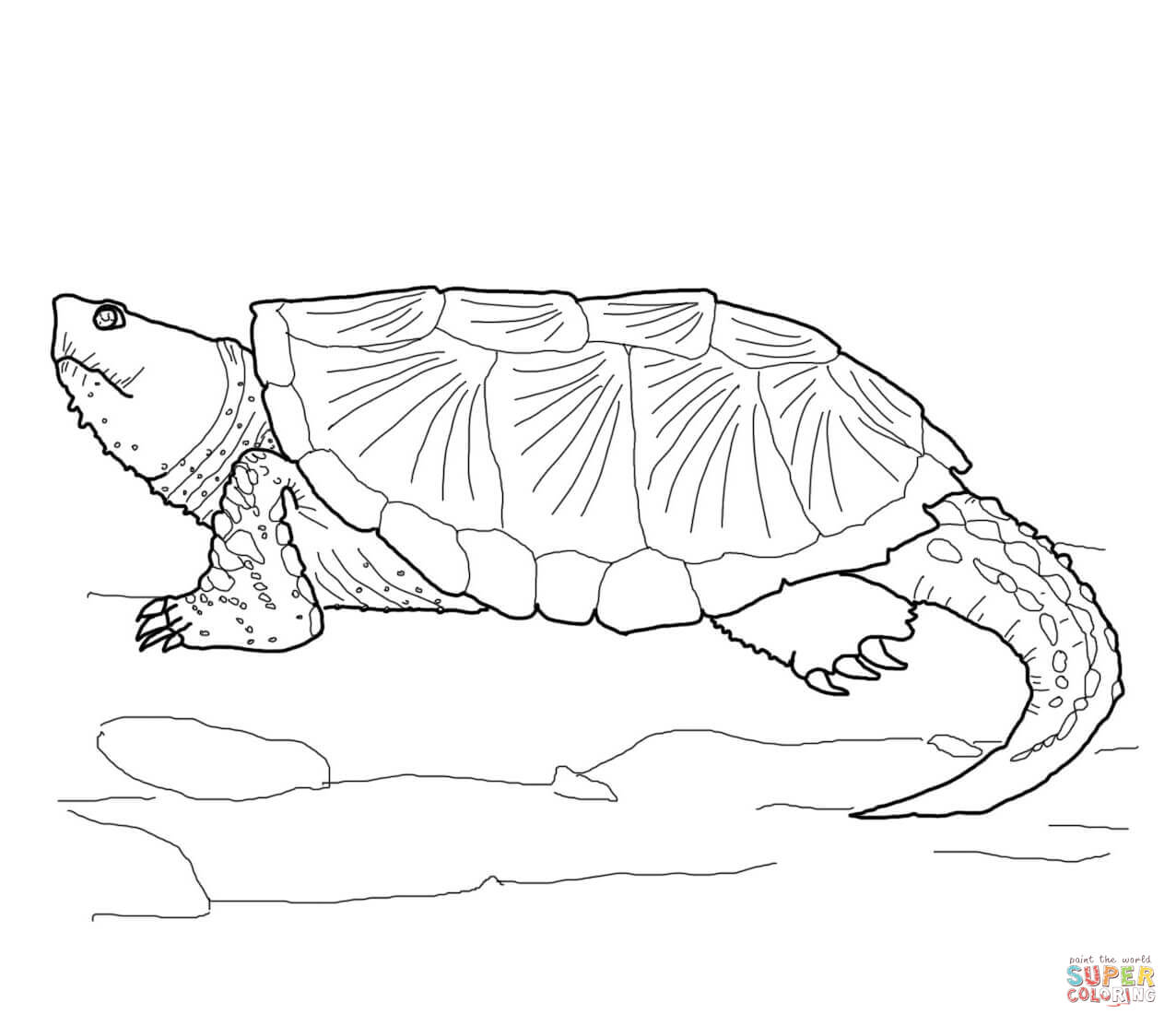 Common Snapping Turtle Coloring Page