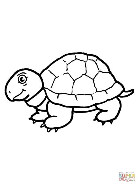 Cute Tortoise Coloring Page Free Printable Pages Click The To View