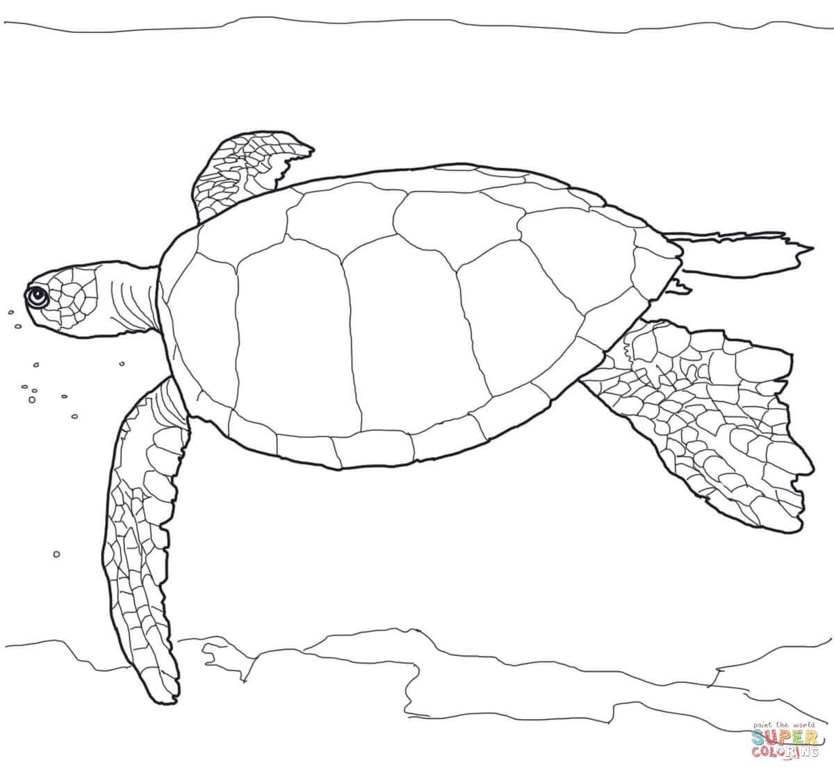 Hawaiian Green Sea Turtle Coloring Page
