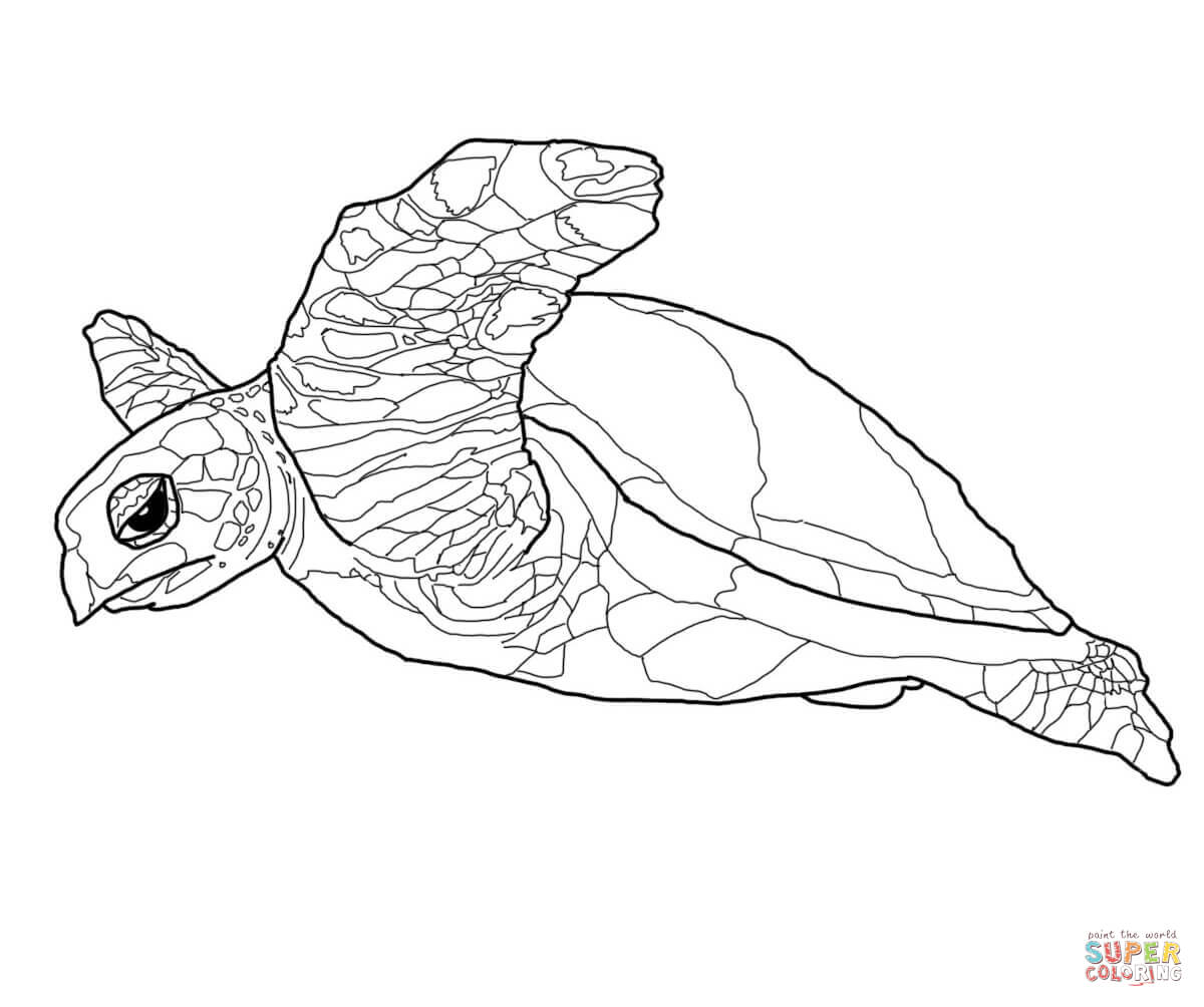 Hawksbill Sea Turtle Coloring Page