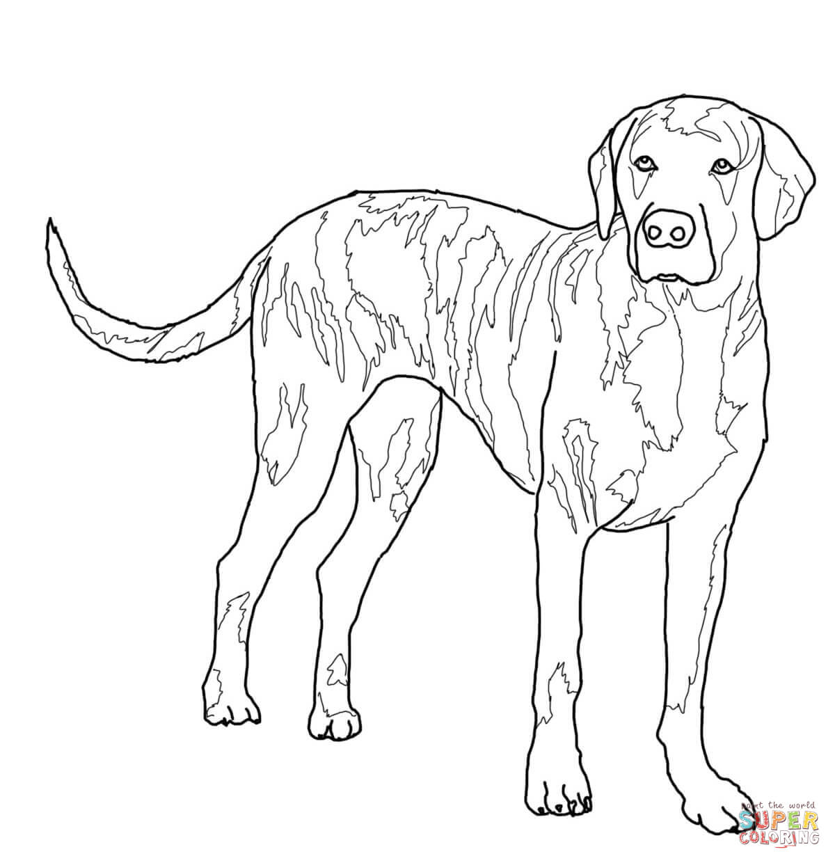 Plott Hound Coloring Page
