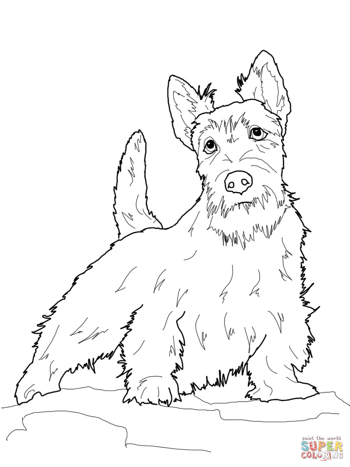 Dibujo De Terrier Escoces Para Colorear