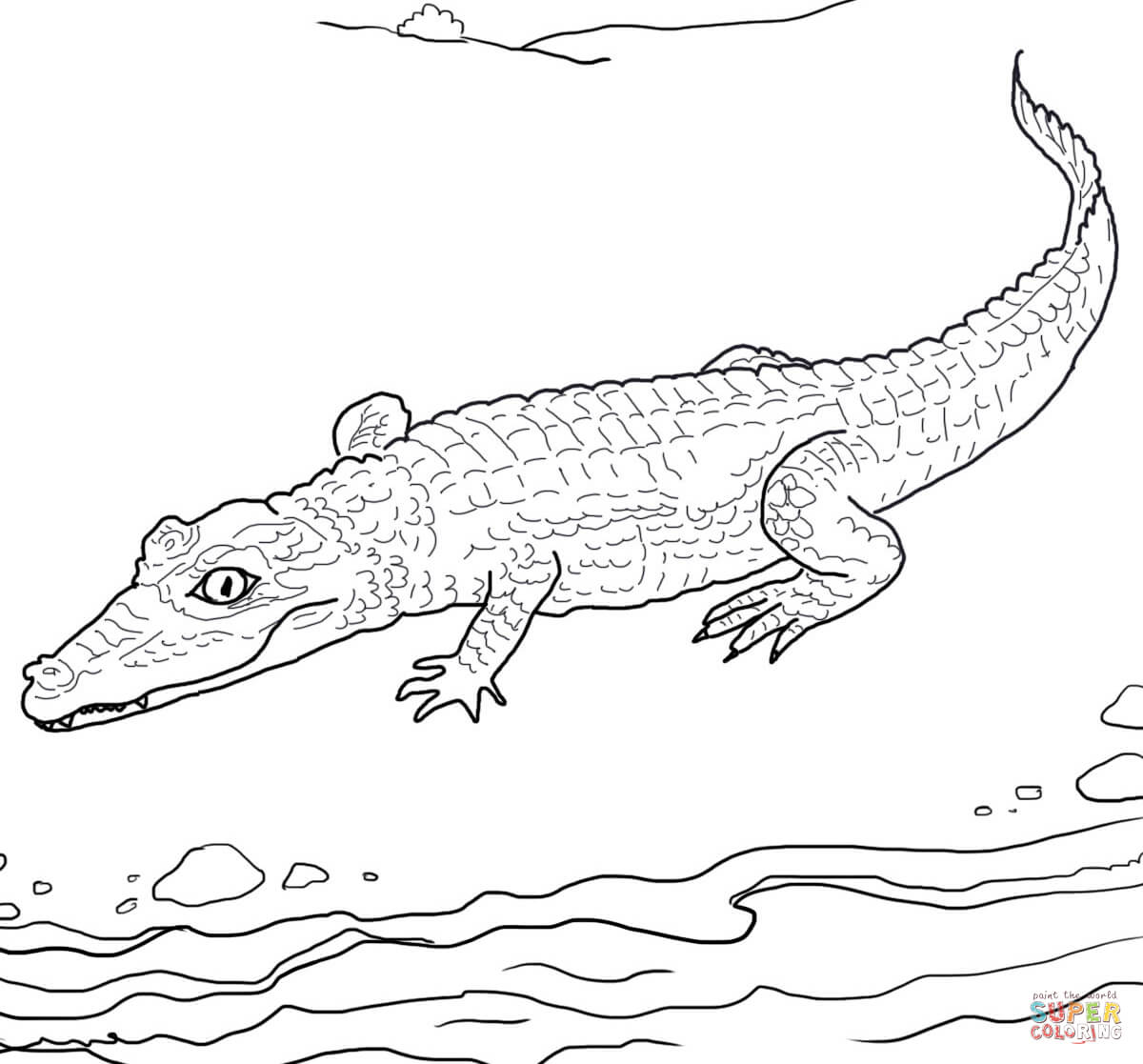 Spectacled Caiman Coloring Page
