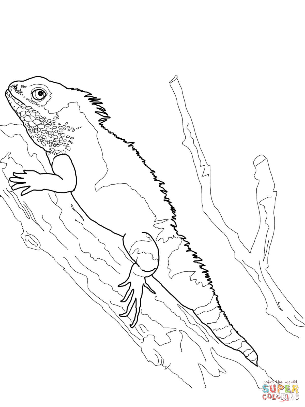 Komodo Dragon Lizard Coloring Pages