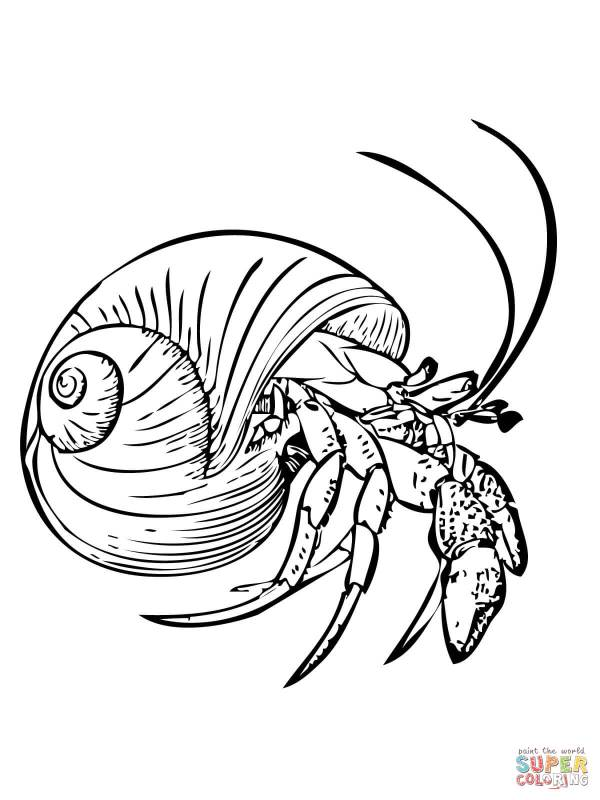 hermit crab coloring page # 2