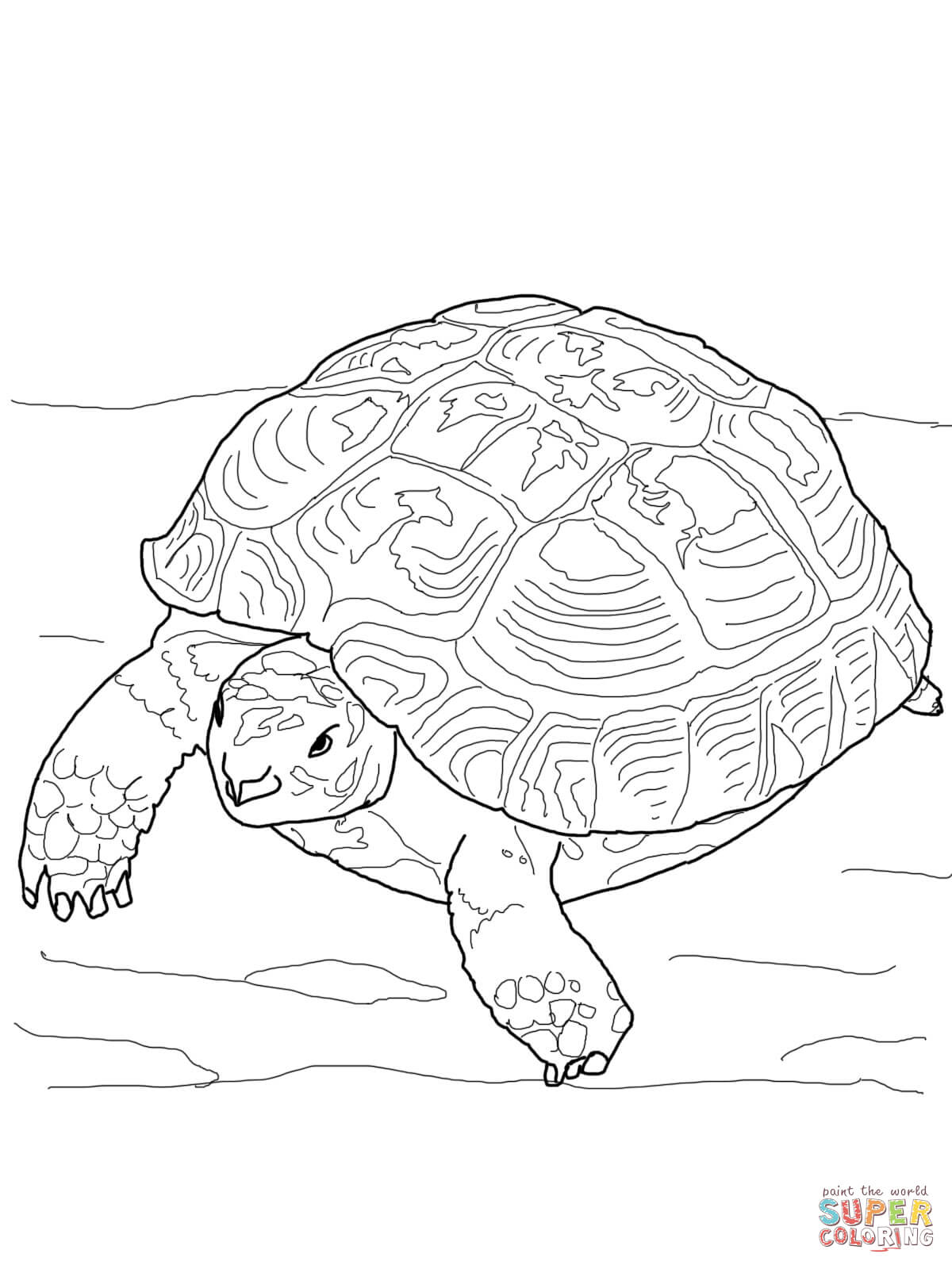 Russian Tortoise Coloring Page