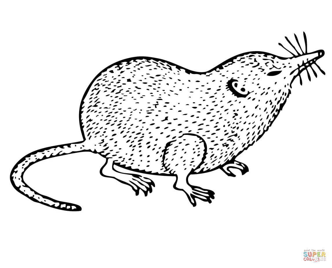 Shrew Coloring Page