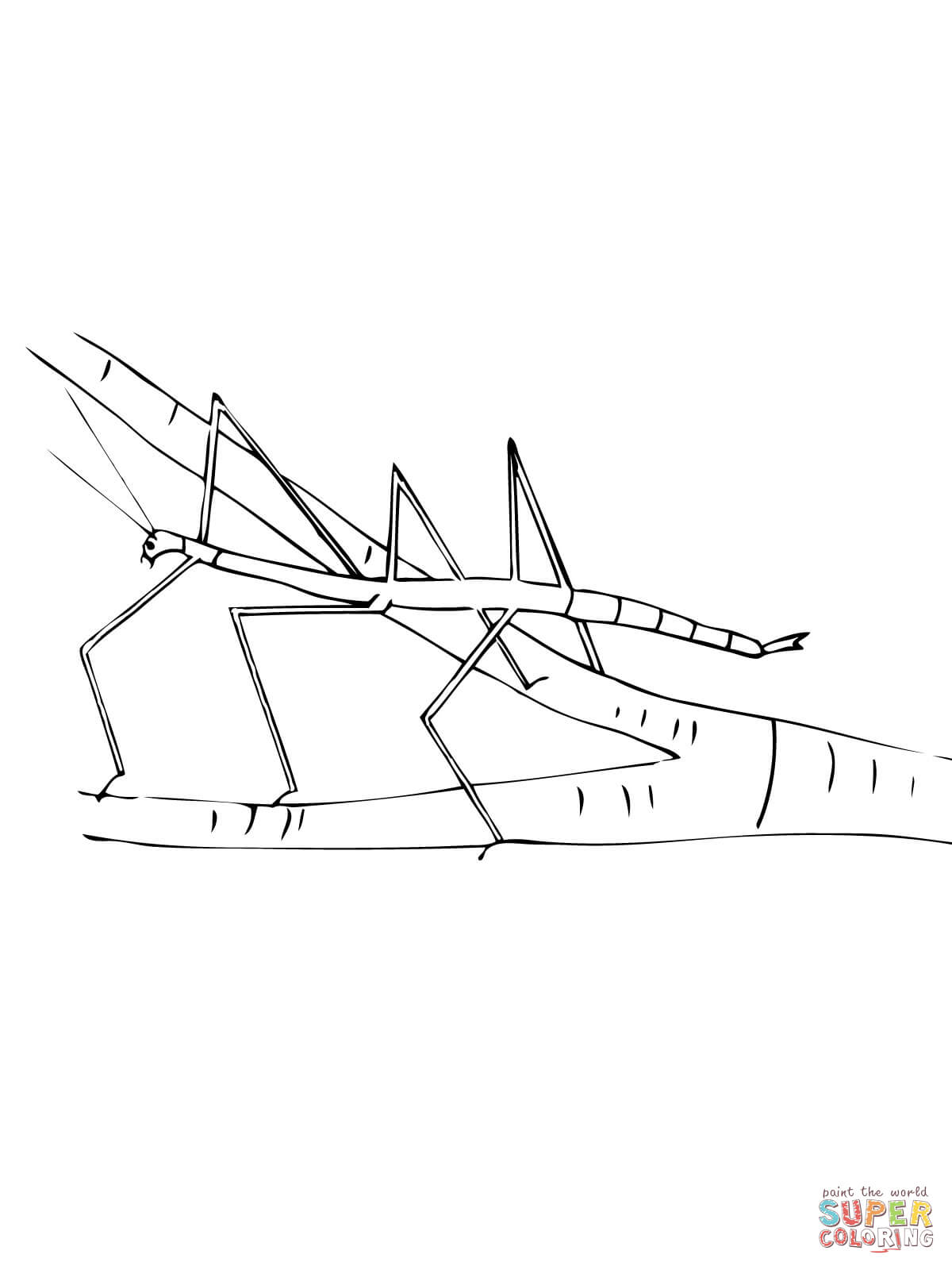 Walking Stick Insect Coloring Page