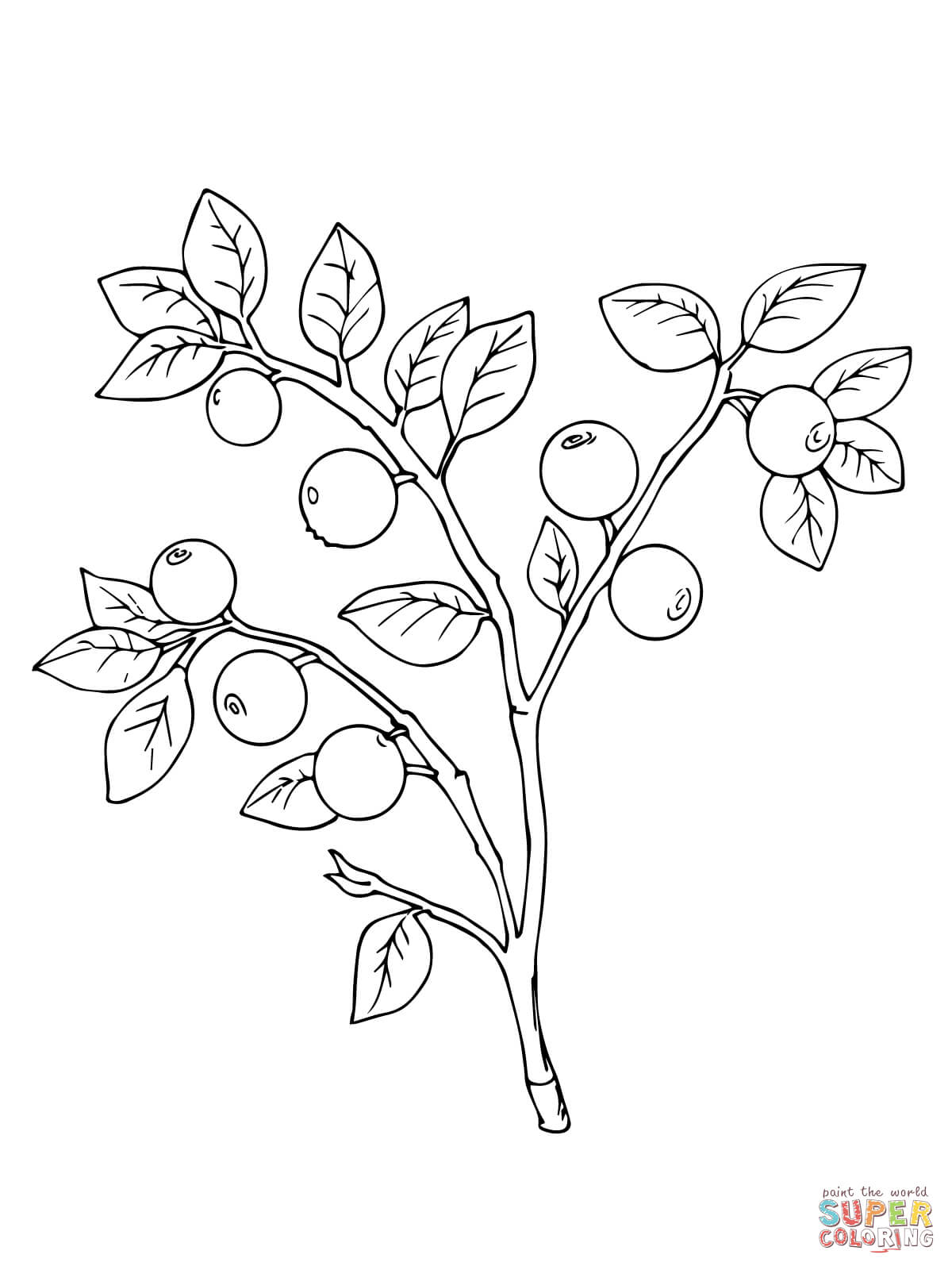 Bilberry Or Whortleberry Coloring Page