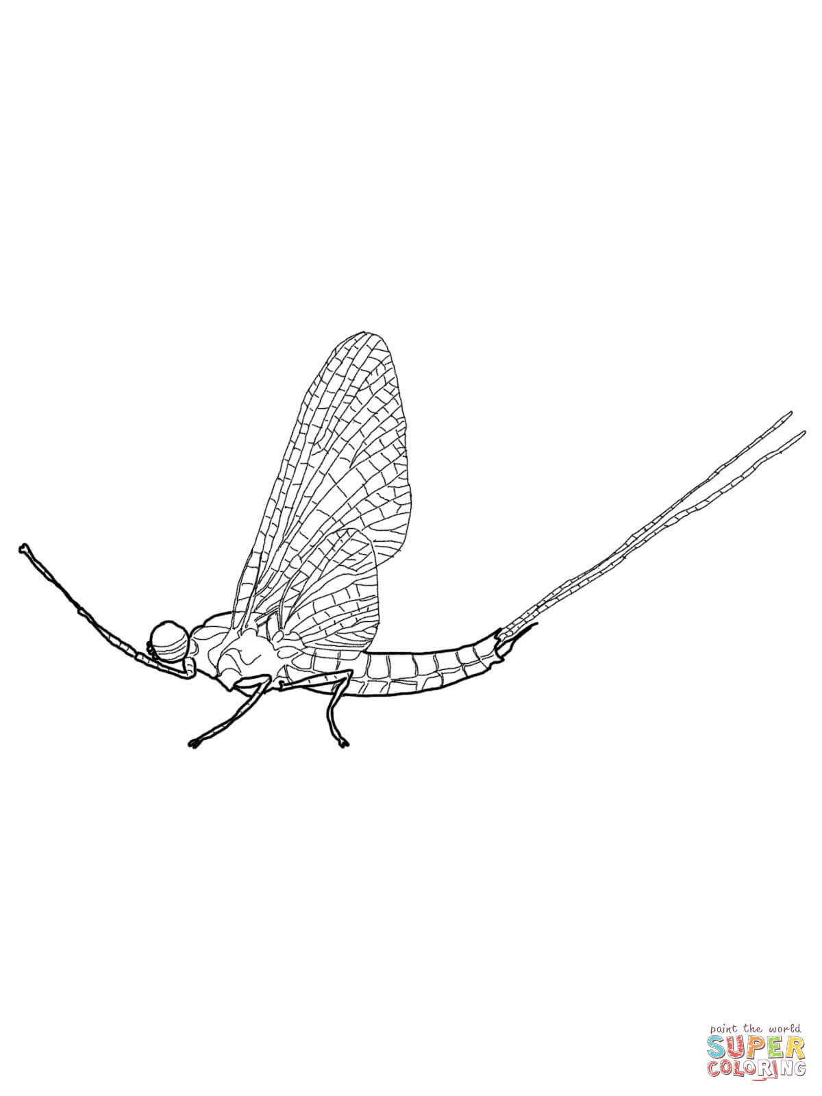 Brush Legged Mayfly Coloring Page