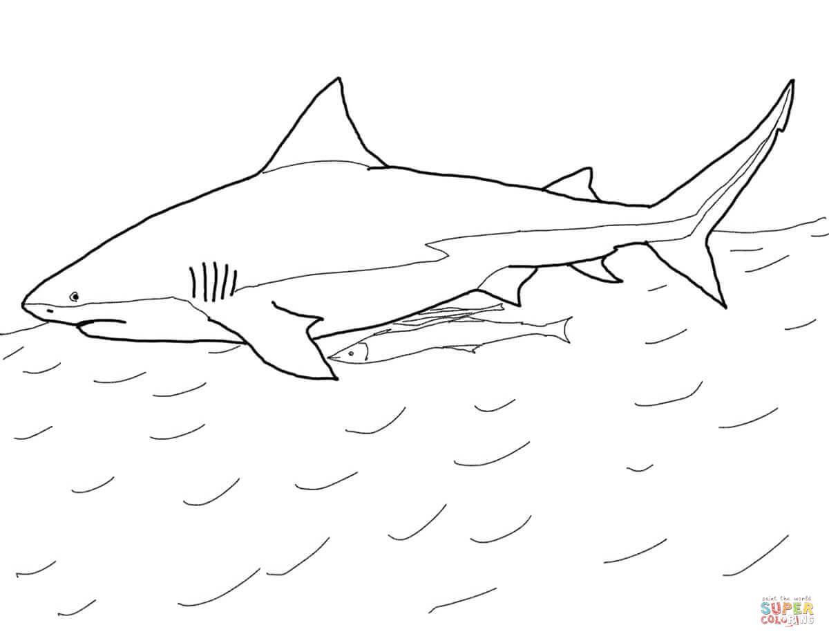 Bull Shark Coloring Page