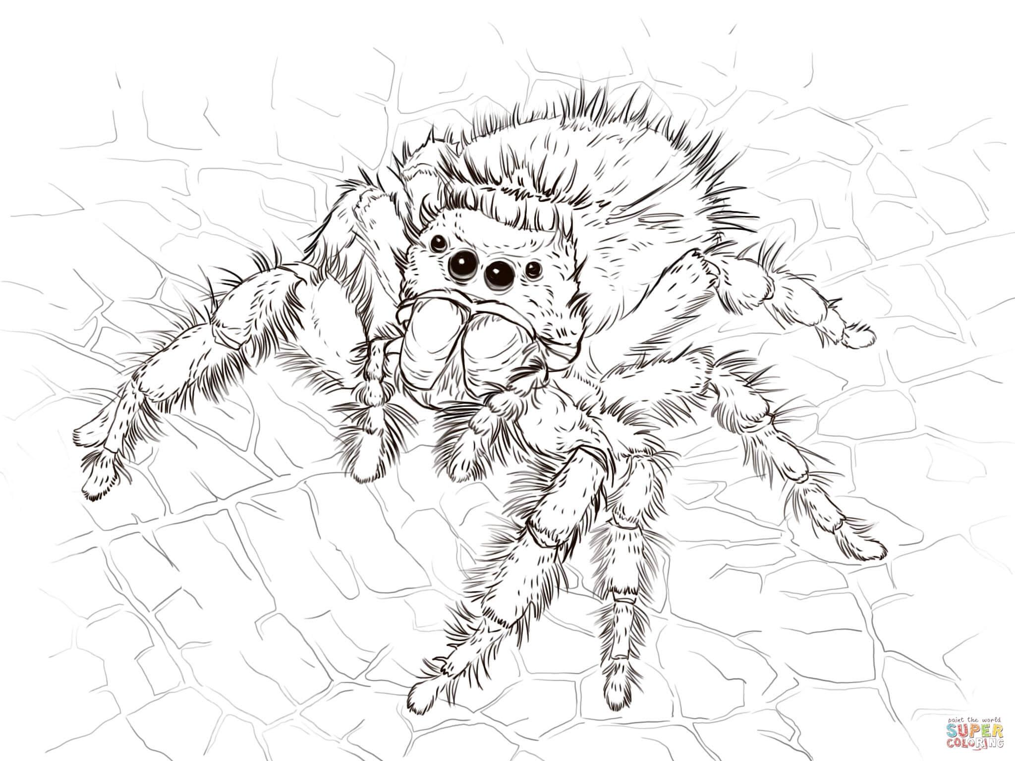 Daring Jumping Spider Coloring Page
