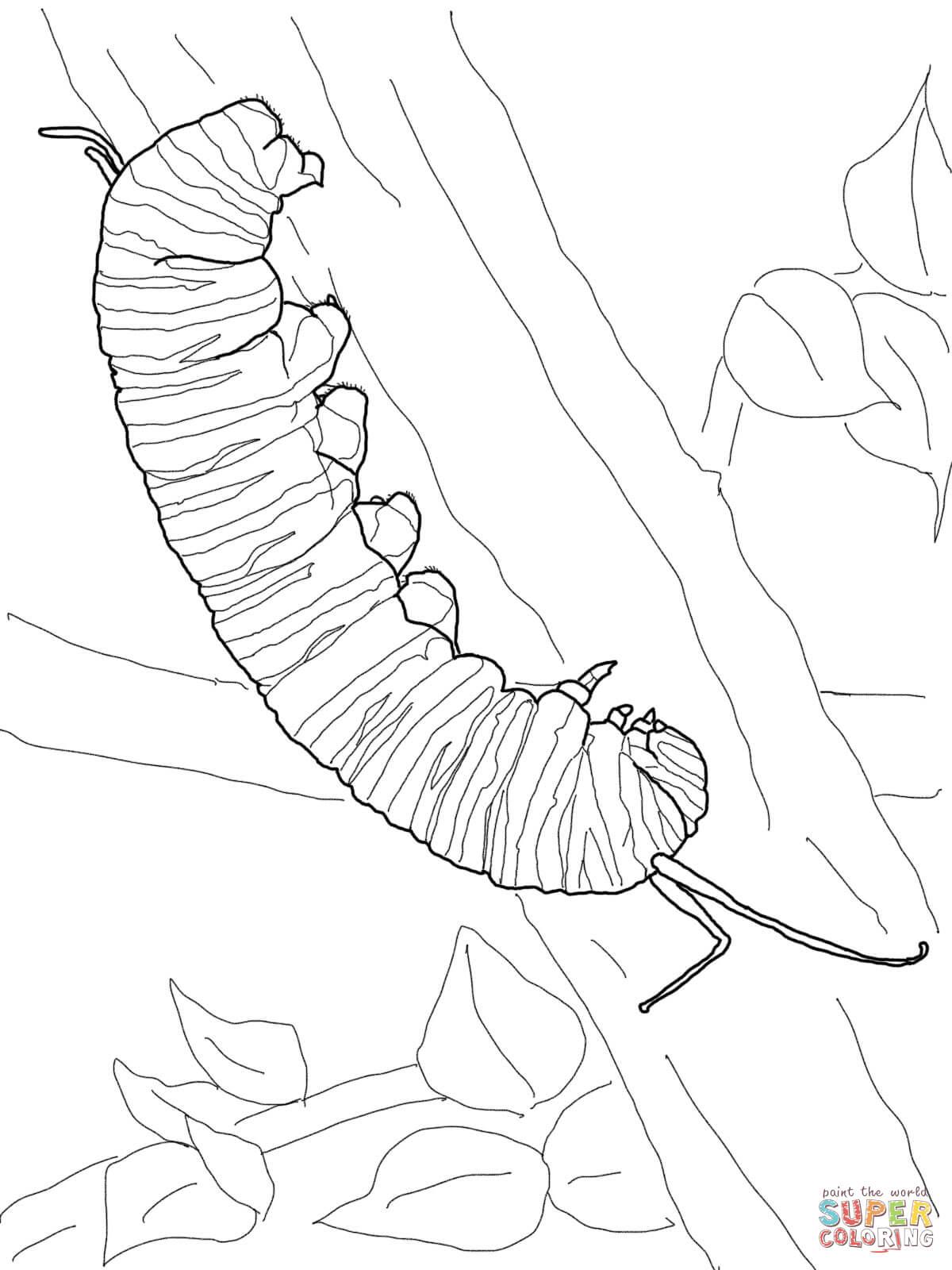 Dibujo De Oruga De Mariposa Monarca Para Colorear