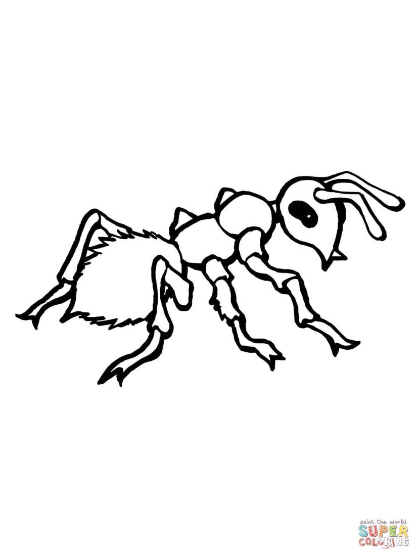 realistic ant coloring page | free printable coloring pages