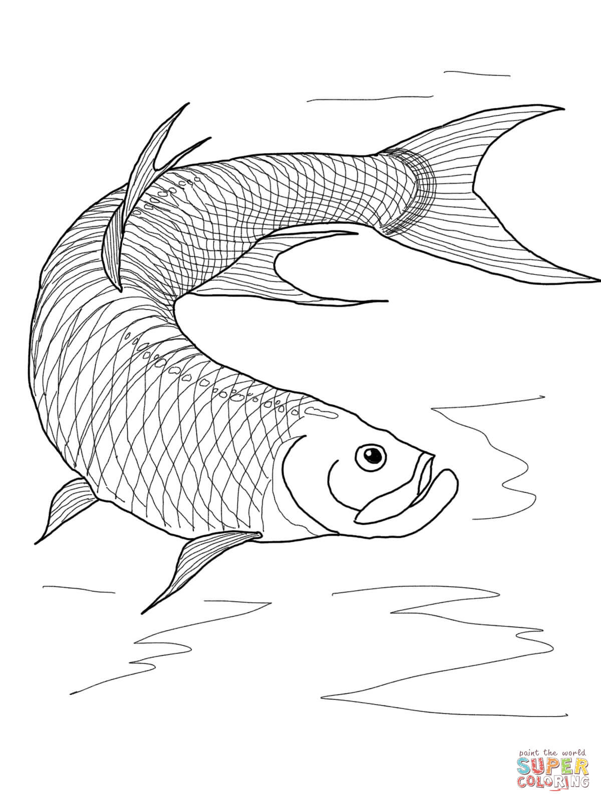 Tarpon Fish Coloring Page Free Printable Coloring Pages