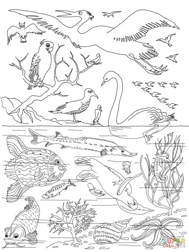 25th Day of Creation coloring page  Free Printable Coloring Pages