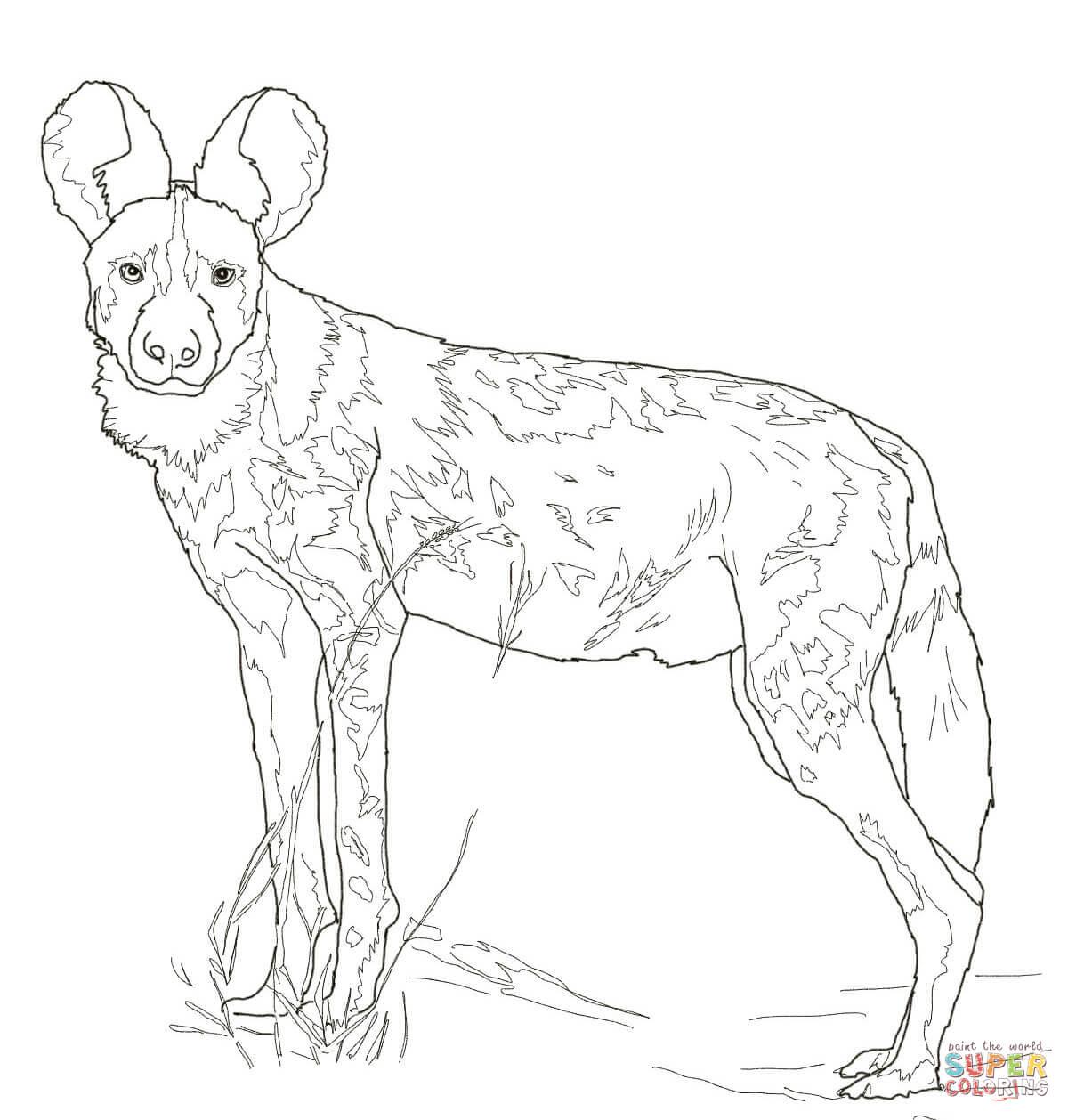 Desenho De Cao Selvagem Africano Para Colorir