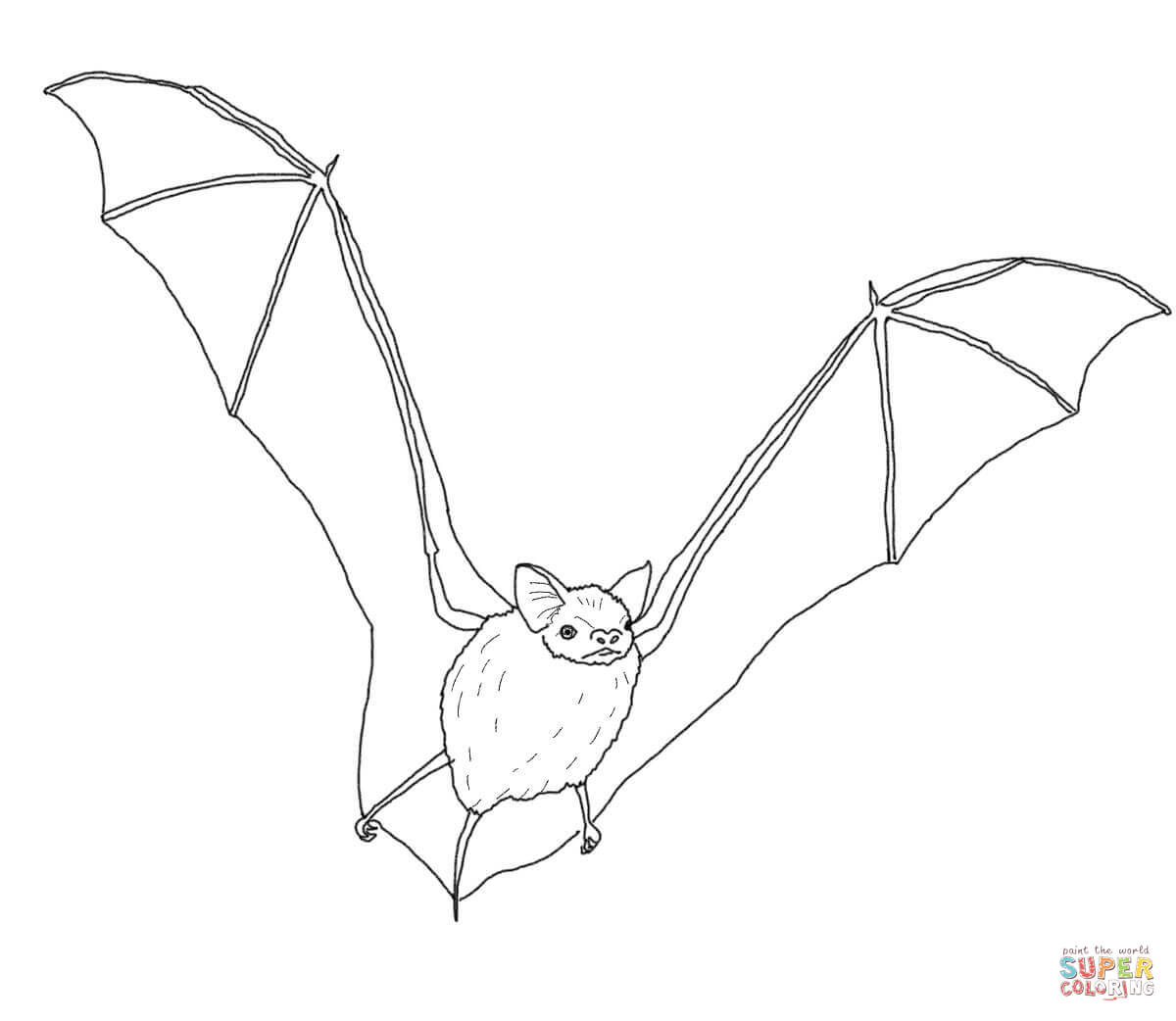 Coloring Pages Of Bats