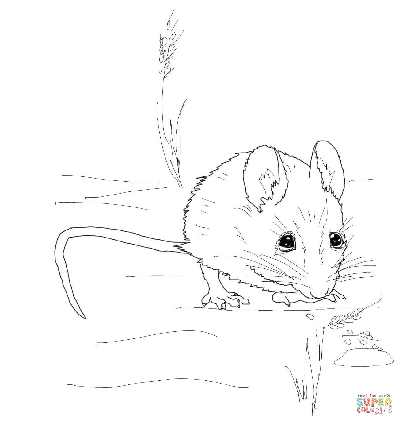 Cute Wood Mouse Coloring Page