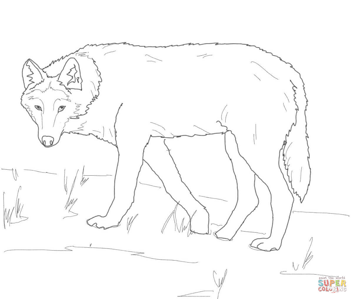 Gray Wolf On Alert Coloring Page